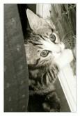 Peek-A-Boo Tilly