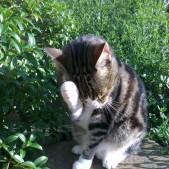 A Cat Lick & A Promise